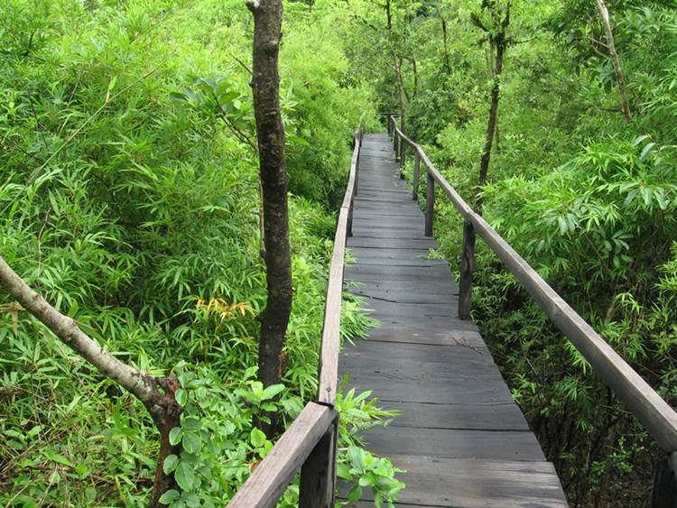 Cat-Tien-National-Park-Vietnam-2