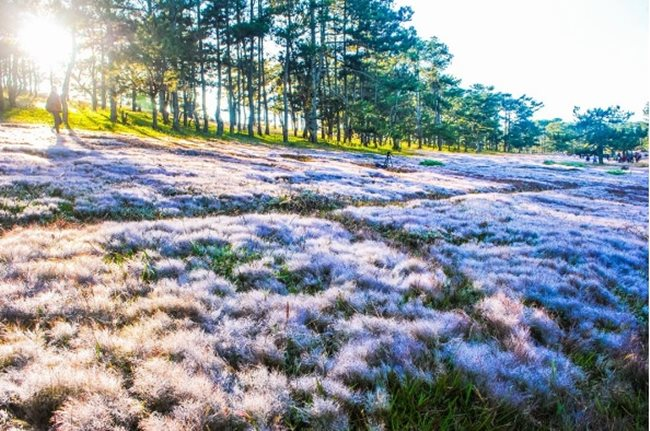 Da Lat Snow field
