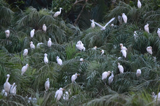 Vam Ho bird sanctuary